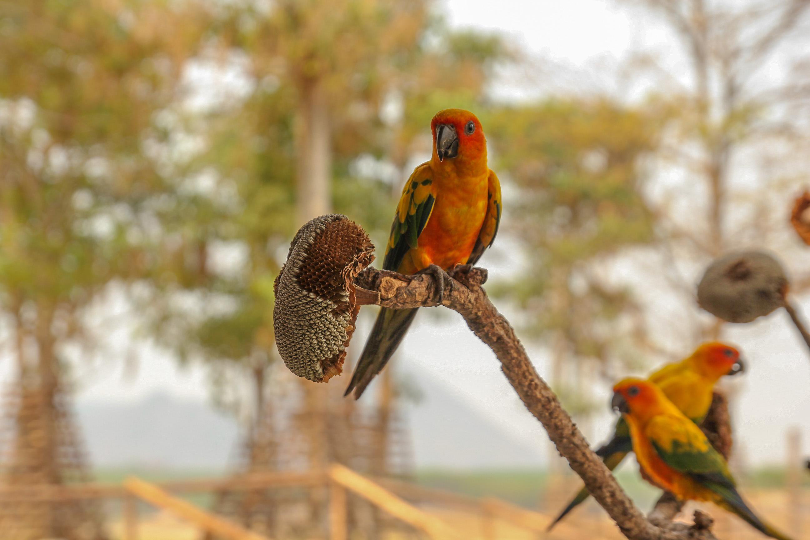 Можно покормить попугаев
